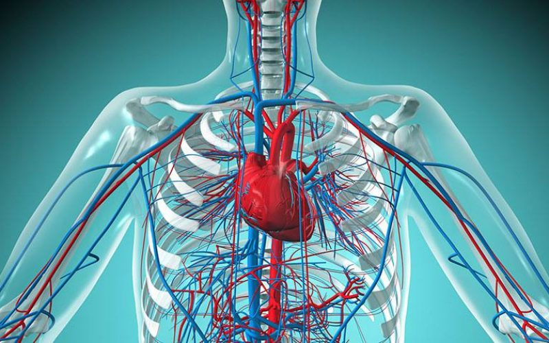 lecenje-bolesti-krvnih-sudova